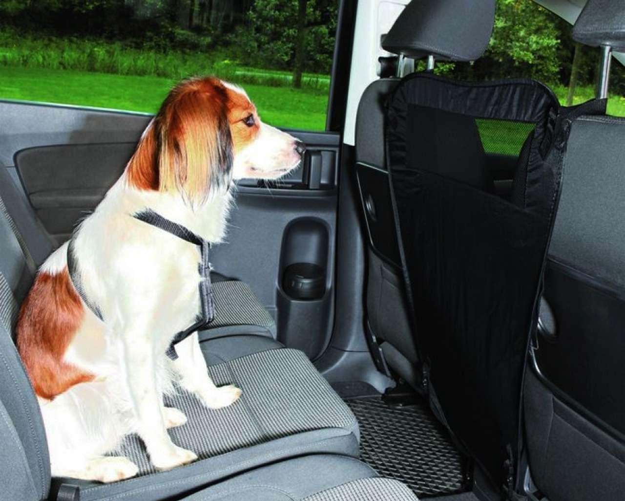 Ваша собака пролает «спасибо»: 13полезных штук дляпутешествий— фото 987716