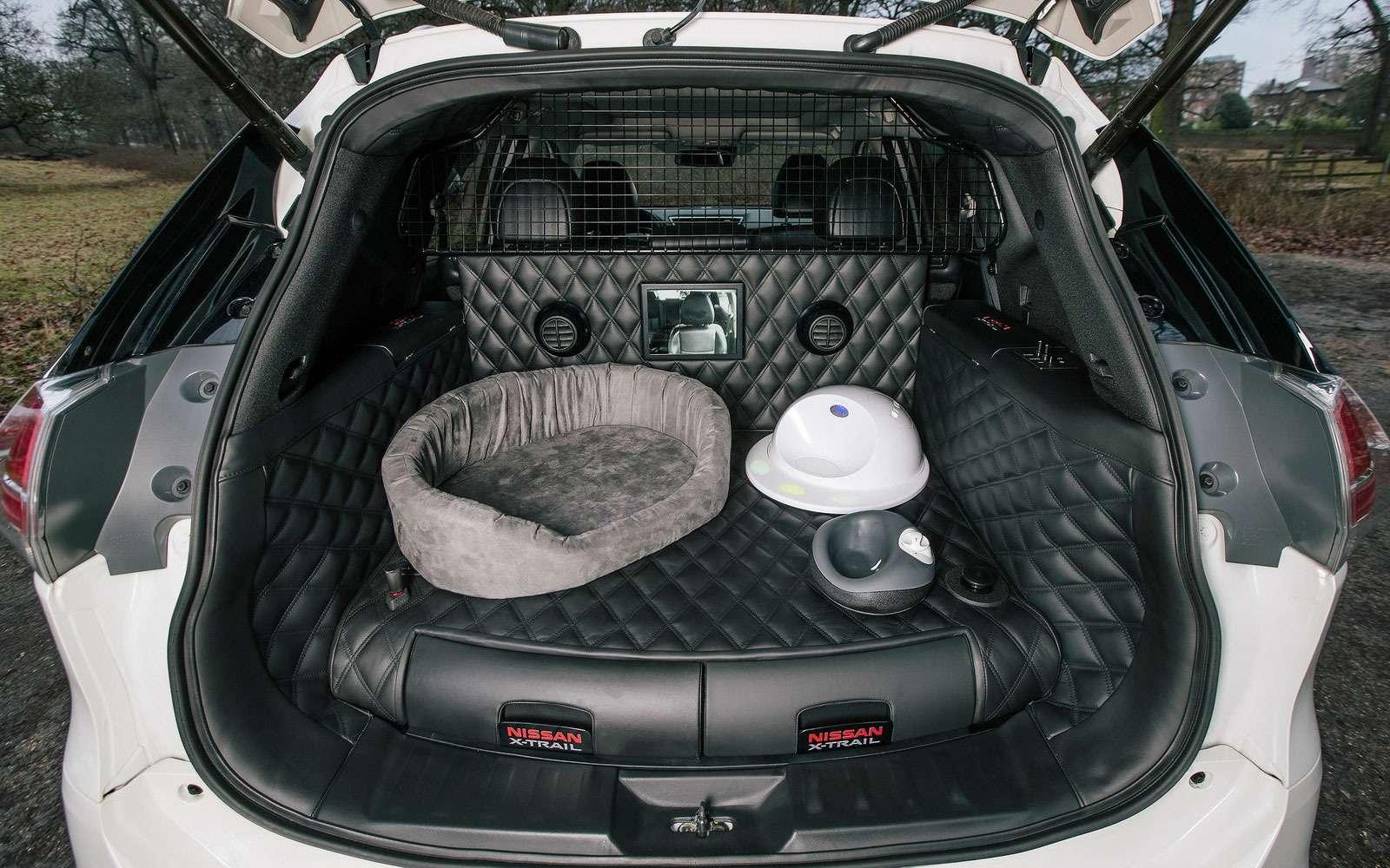Подвижный груз— как правильно перевозить домашних животных— фото 773090