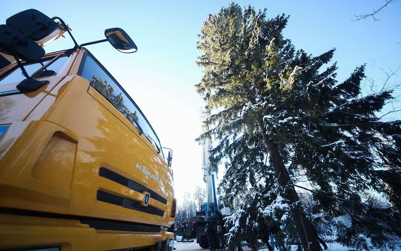 Главная елка страны (икак еевезли вКремль)— фото 932560