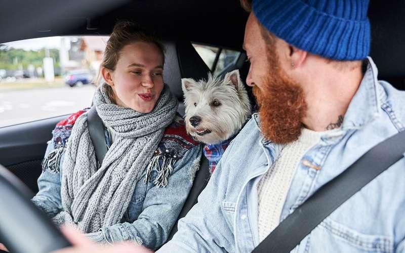 Собака +автомобиль: 4самых живучих заблуждения
