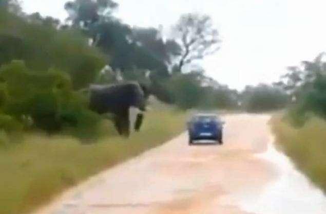 Слон раздавил автомобиль стуристами аЮАР