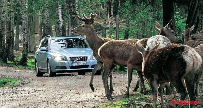 Компания «Вольво» работает надсистемой распознавания животных вопасной близости отавтомобиля. Через год-два новая опция пойдет всерийное производство.