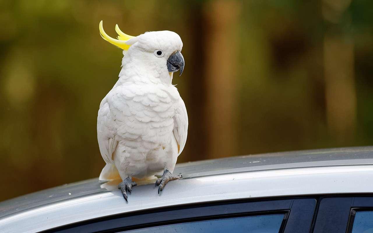 Как правильно перевезти птицу  5 советов эксперта