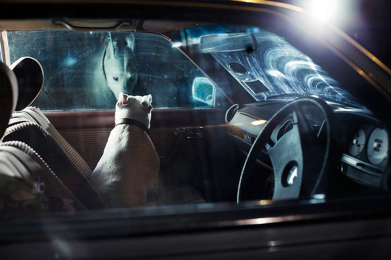 dogs-in-cars-the-artistic-side-of-abandoning-man-s-best-friend-photo-gallery_4