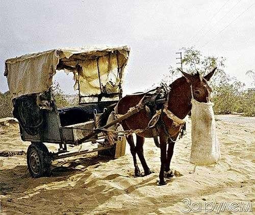 Марокко не так далеко— фото 28326