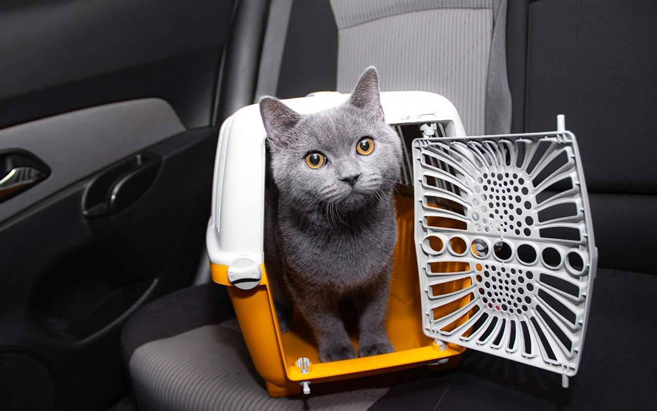 Кошка, собака иптица: перевозим всех сразу!— фото 1241740