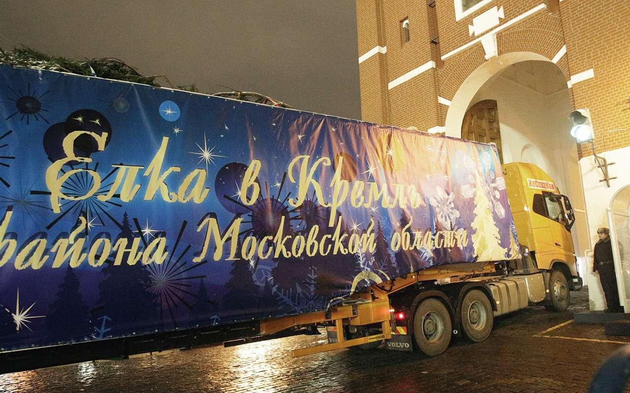 Главная елка страны (икак еевезли вКремль)— фото 932558