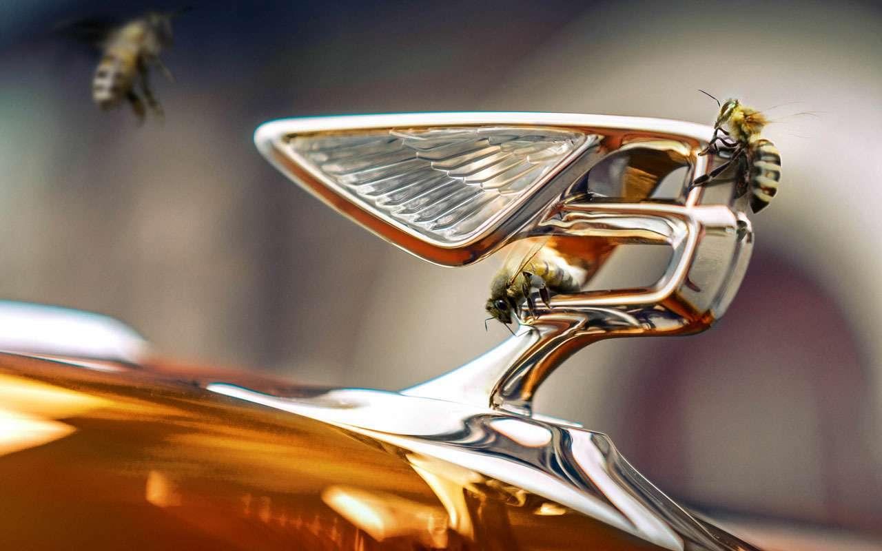 Bentley занялась производством меда— фото 989501