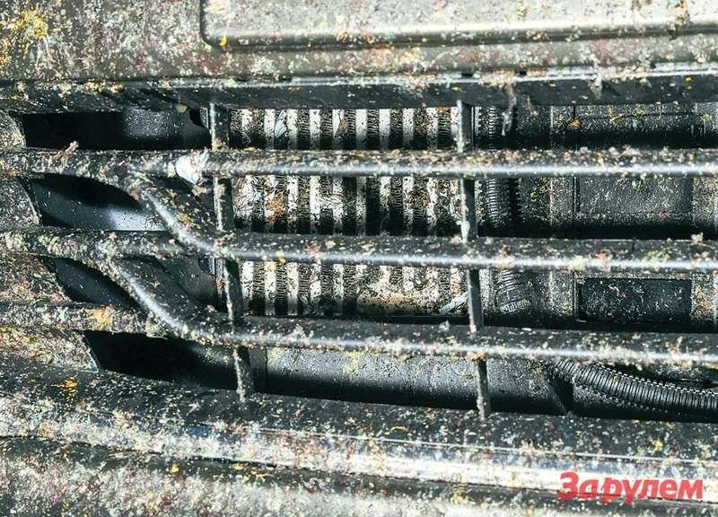 К финишу марафона радиаторы всех трех автомобилей оказались забиты насекомыми.