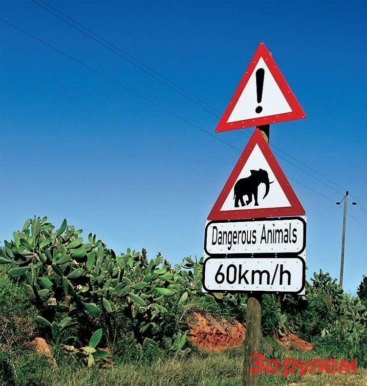 ПДДвэтой стране, вобщем, такие же, как ивезде. Новстречаются иоригинальные дорожные знаки.