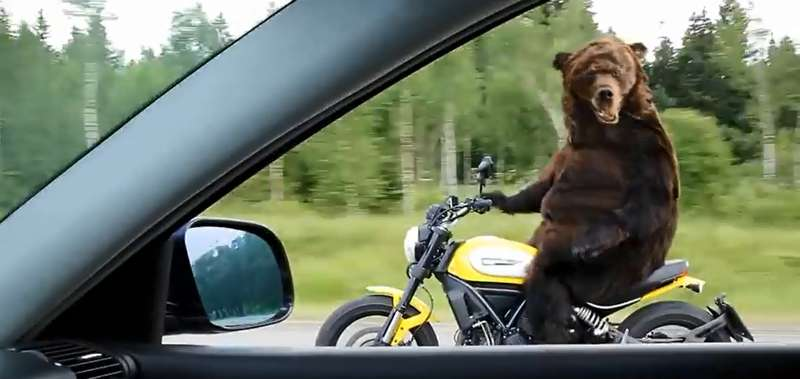 Bear Moto