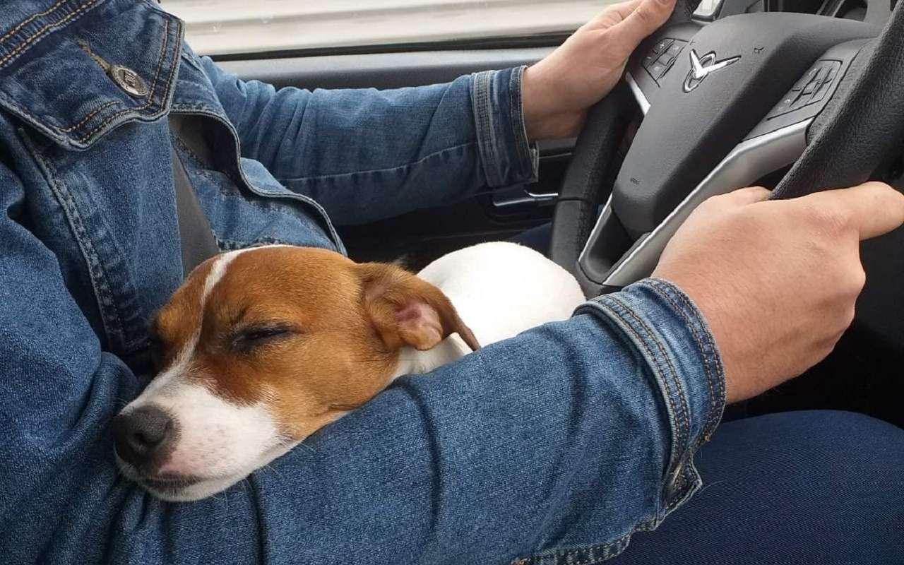 УАЗобъявил перепись собаководов— фото 1222219