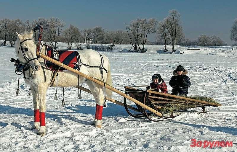 Неожиданный плюс впользу коня: править таким экипажем могут даже дети. Алексей иИван звонко крикнули классическое «н-но-о!», иКардинал послушно поехал.
