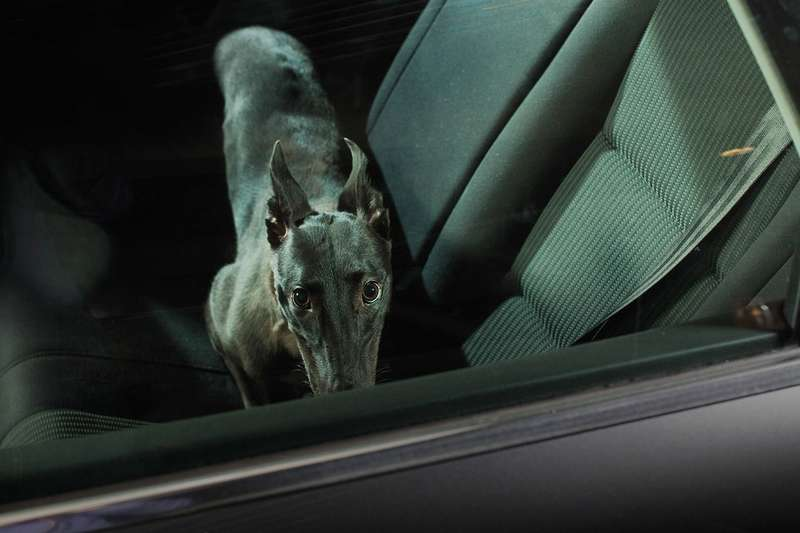 dogs-in-cars-the-artistic-side-of-abandoning-man-s-best-friend-photo-gallery_12