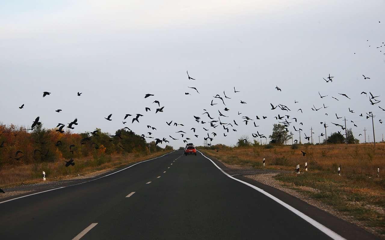 Автопробег «Зарулем», день 2-й: отКазани доКазахстана— фото 906301