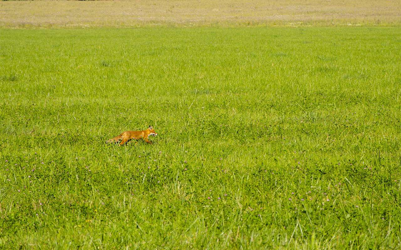 Большое путешествие наШкоде Кодиак: «однушка» наколесах— фото 814324
