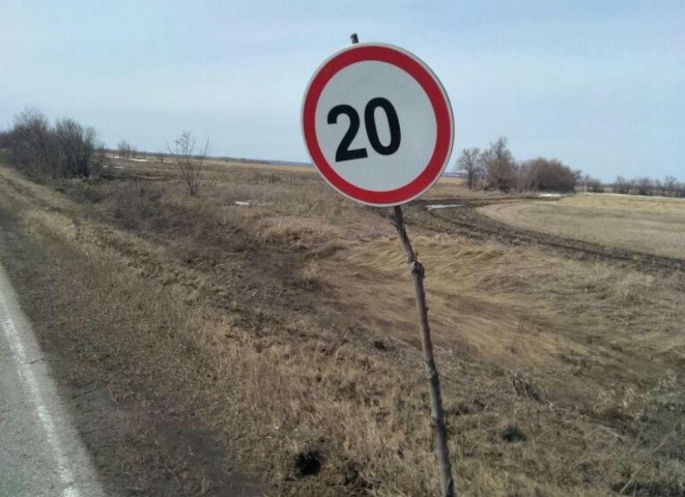 Дорожные знаки наспиленных ветках. Экономия или шутка?— фото 863109