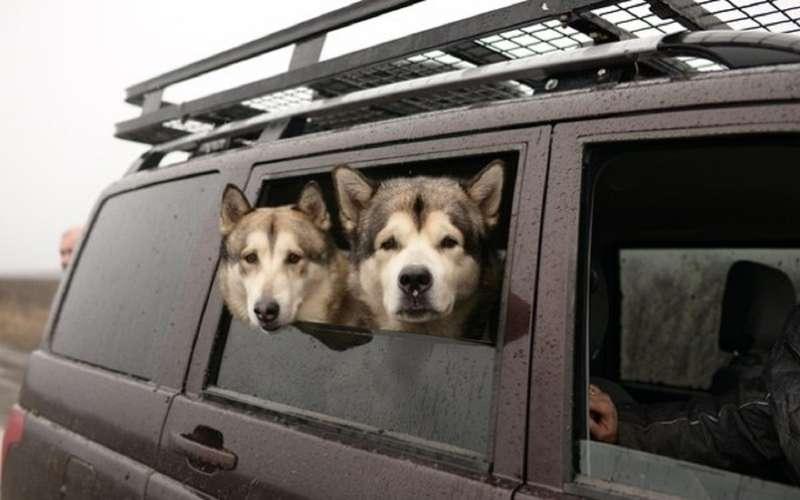 УАЗобъявил перепись собаководов